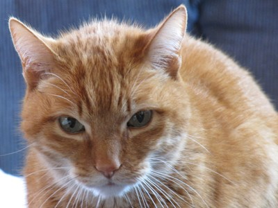 Los gatos senior tienen unas necesidades diferentes