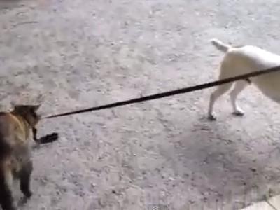 Gatos, marcaje con arañazos