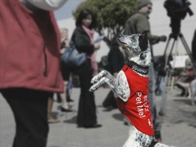Perros contra el miedo a volar en Los Ángeles, California