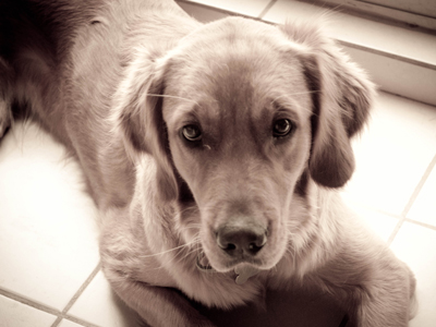 En León se abandona cada día una mascota
