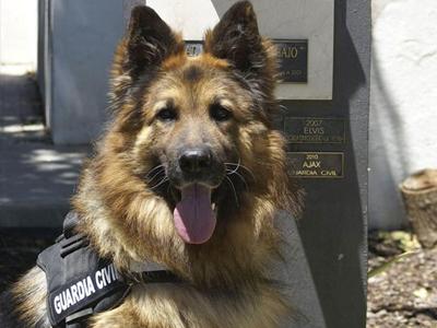 España, premia a perro por su excepcional trabajo