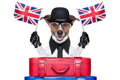 A Gran Bretaña...no sin mi perro